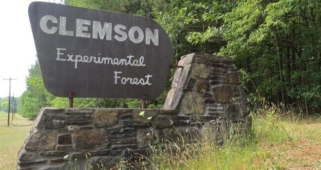 Clemson Experimental Forest Tours: 11/9/19