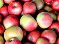 Lunch and Learn, Kerrie Roach: Apples- CANCELLED