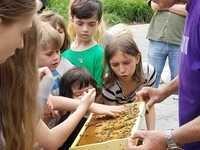 Junior Naturalist Club