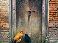 A Window to the Doors of Kathmandu, by Nipun Prabhakar