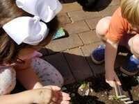 Garden Sprouts Fall 2019