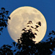 Sturgeon Moon Hike