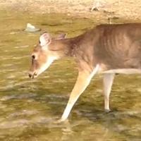 Wildlife Diseases