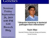 "MBG Friday Seminar - Promotion Talk: Yuxin Mao ""Ubiquitin hijacking in bacterial pathogen-host interactions"""