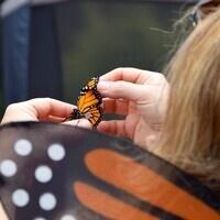 Monarch Fiesta Day