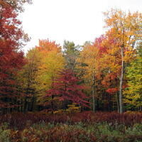 Forbes Fall Foliage