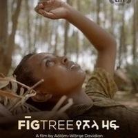 MVIFF: Fig Tree