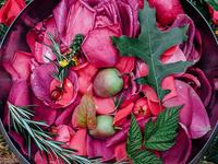 DiviniTea Series: Magical Herbology