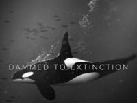 """Damned to Extinction"""