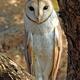 Meet the Barn Owl, PA's Best Mouser