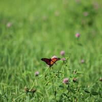 Meet the Butterflies