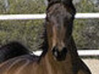 Wild Hearts Equine Therapy-How & Why Horses Heal:Understanding the Horse-Human Contact