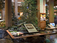 Senior Day at the World Forestry Center Museum