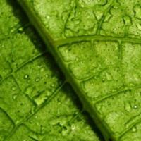 Botany Journal Club