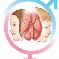 Sex Differences in the Developing Brain; the Role of Environmental Exposures