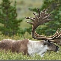 Cod to caribou: Valuing natural capital based on ecological dynamics