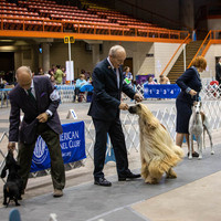 Rapid City Kennel Club Dog Show