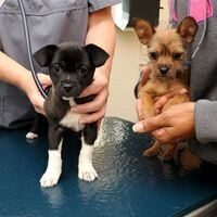Tufts University School of Veterinary Medicine