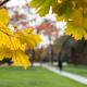 Fall Semester 2019: Mid-Semester Break