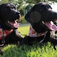 USVSD Service Dog Club: Interest Meeting