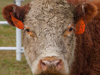 Beef Cattle Outlook & Volatility Workshop