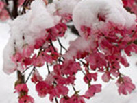 Inspiration for a Winter Garden