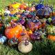 Glass Pumpkin Patch Live Oak, CA Oct 26 & 27 10-4pm