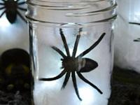SUB Presents: Spooky Crafts