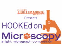 HOOKEd on Microscopy: Voting