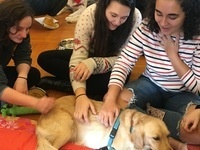 """""""Yappy Hour with Therapy Dogs"""" - Alcohol Awareness Month Kick-Off Event"""