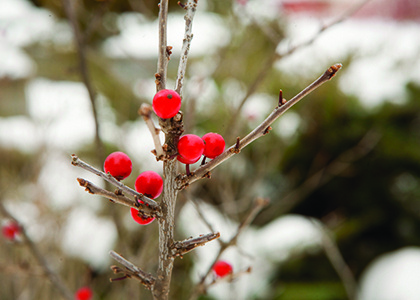 Dec 20, 2019: Plants and Stories of the Winter Solstice							 at Brian C. Nevin Welcome Center