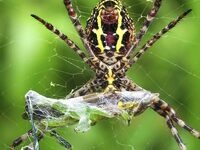 Arachnophilia: A Passion for Spiders Exhibit Opening Reception