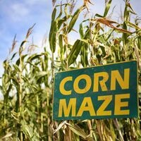 Valley Corn Maize
