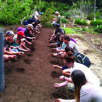 Future-Proof your Vegetable Garden: Improve Soil Health for Drought Resiliency