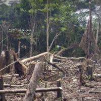 Governing the Rainforest: Sustainable Development in Brazil