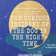 "UTRGV Productions presents ""The Curious Incident of the Dog in the Nighttime"""