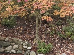 Autumn in the Arb