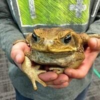 Creature Days at Locust Grove Nature Center