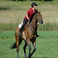 Horseback Riding, English: Beginner