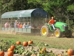 Pumpkin Hunt and Hay Ride