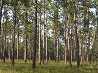 Lexington County Forest Landowners Association