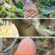 Banksias: Selection, Design, Cultivation, & a Little Bit of Botany