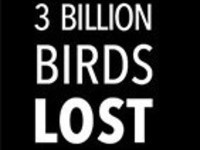 3 Billion Birds Lost: The Bird Crisis and What We Can Do About It