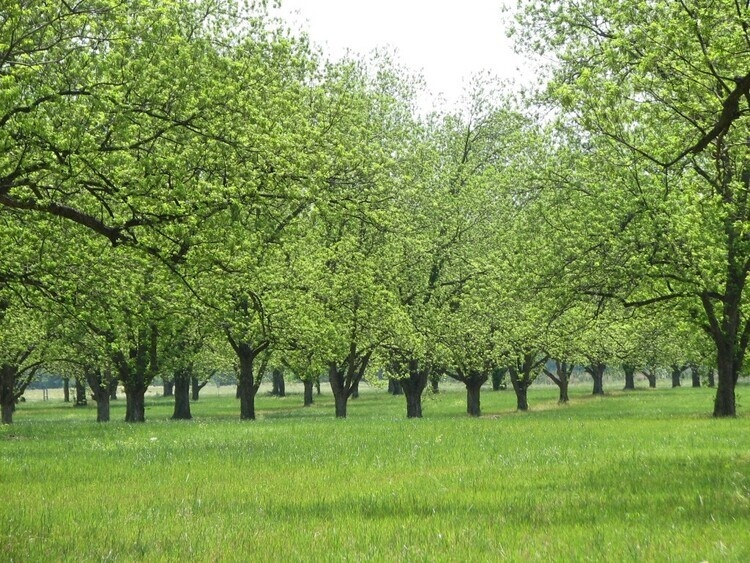 Management of Pecans and Nut-Producing Trees