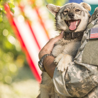 Animal Warriors: At the Intersection of Animal Law and Veterans Affairs