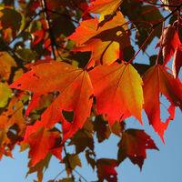 Fall Photography Tips Hike