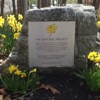 Daffodil Project Memorial & Planting Ceremony