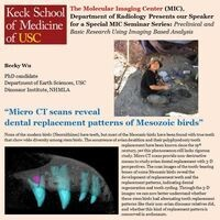 Micro CT scans reveal dental replacement patterns of Mesozoic birds
