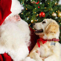 Santa Paws at Westfield Valencia Town Center