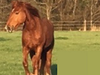 Equine Pasture Workshop